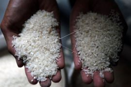 Diaspora Indonesia menciptakan beras berprotein tinggi