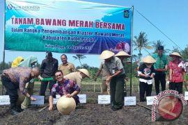 Kulon Progo tanam bawang merah dengan benih biji