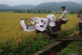 Penyaluran benih padi inbrida di DIY dioptimalkan untuk swasembada pangan