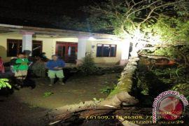 Angin kencang akibatkan sejumlah pohon tumbang