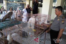Polisi sita 443 ekor burung langka