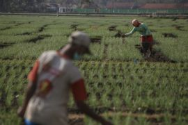 Bantul akan rekayasa  komoditas pertanian pesisir Baros
