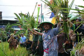 Kampung Agro Rejowinangun panen padi 1,6 ton