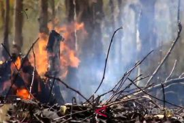 Kebakaran lahan mayoritas di empat kecamatan