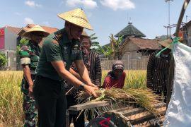 Luas lahan pertanian Yogyakarta terancam berkurang