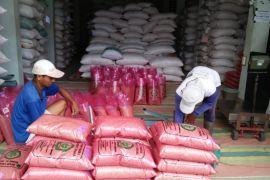 Stok benih padi di Bantul mencukupi kebutuhan