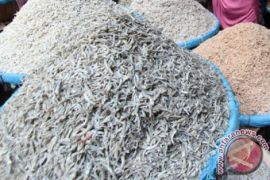 BBPOM DIY telusuri pemasok ikan teri beformalin