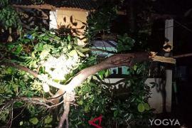 Sleman antisipasi pohon rawan tumbang