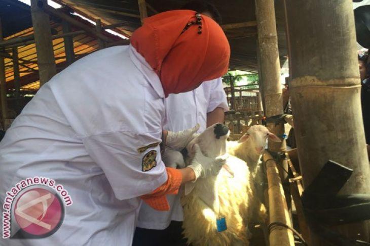Dinas sisir hewan kurban di tempat penampungan