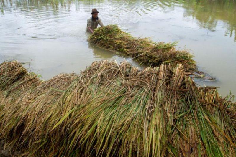 Bantul Programkan Kegiatan Pertanian Terdampak Banjir 2018 Antara