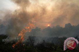 1.602 titik api terdeteksi di Kaltim-Kaltara
