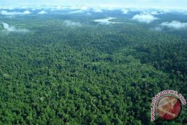 Komitmen Jaga Kelestarian Hutan