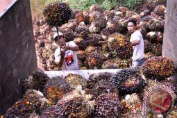 Uni Eropa tetap pasar terbuka minyak sawit Indonesia?