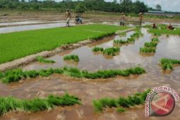 Majukan Pertanian Seruyan, HKTI Seruyan Siap Bantu Pemerintah