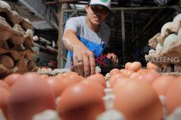 Harga telur ayam ras di Seruyan naik