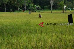 Barsel terus genjot pertumbuhan di sektor pertanian