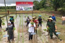 Kodim dan Pemkab Kobar tanam padi  di sawah baru