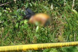 Ditemukan mayat wanita membusuk di perkebunan sawit Bartim