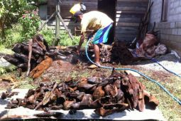 Gaharu hutan andalan pendapatan warga Bangkal Seruyan