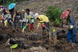 Warga Barito Utara mulai menanam padi ladang