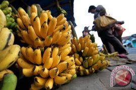 Cara memilih pisang yang baik untuk asupan gizi