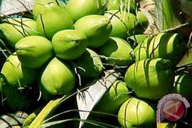 Harga kelapa dalam Seruyan anjlok, petani merasa kesulitan