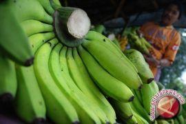 Jaga kesehatan sistem pencernaan dengan konsumsi makanan ini