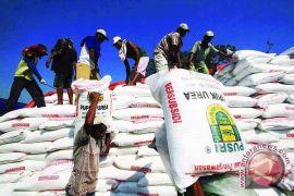 Distribusi pupuk bersubsidi di Barut capai 1.353 ton