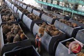 Ekspor Minyak Sawit Meningkat 25 Persen