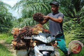 Ternyata! Kebutuhan Tenaga Kerja untuk Perusahaan Sawit di Kotawaringin Timur Masih Tinggi