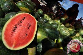Kulit semangka ternyata mampu sebagai gel anti jerawat