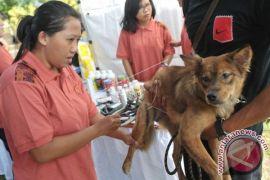 Waspada! anjing di Barsel positif rabies