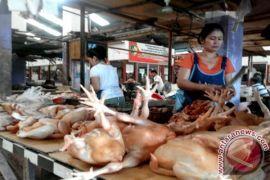 Harga Ayam Potong di Sampit Naik