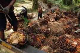 Legislator: evaluasi perizinan perusahaan sawit di Kotim