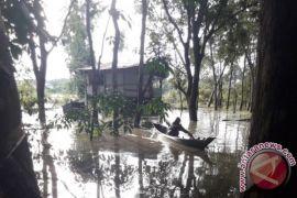 Ratusan hektare kebun karet di Barito Utara terendam banjir