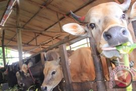 Warga Tangkiling resah adanya pencurian sapi