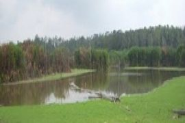 Waduh! Limbah Pabrik CPO Diduga Cemari Danau Seluluk Seruyan