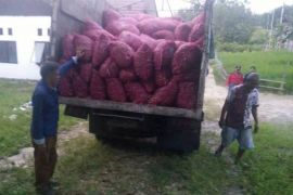 Ini Para Poktan Barut yang Terima Bibit Bawang Merah 30 Ton