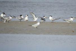 Pantai Satiruk, Surga Wisata Tersembunyi di Kotawaringin Timur