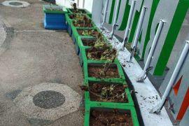 Pemkab Barito Utara Akan Bentuk Petugas Taman, Untuk Apa?