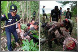 BKSDA Mengevakuasi Orangutan di Desa Sungai Bakau