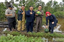 Petani Buah di Palingkau Butuh Pengairan Lahan