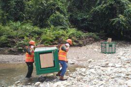 8 Orangutan Dilepasliarkan ke Hutan Lindung Bukit Batikap