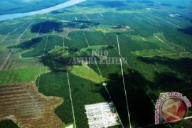 Realisasi plasma sawit di Seruyan capai 13.541 hektare