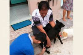 4.000 ekor anjing di Palangka Raya telah divaksin anti rabies