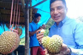 Wabup Kotim: buah lokal jangan tersisih sawit