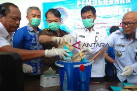 BNNP Kalteng musnahkan 1.094 gram sabu