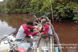 BKSDA Kalteng pancing buaya Sungai Mentaya dengan umpan bebek