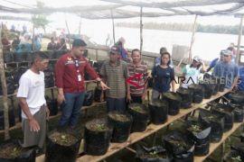 Asa Gunandi, ingin sukses berkebun lombok dan terong