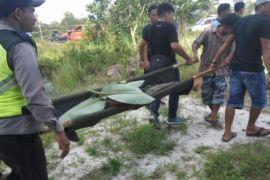 Tertimpa dahan pohon, pria Pahandut Seberang meninggal